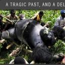 galiwango_film_2007_gorilla_map_world_change