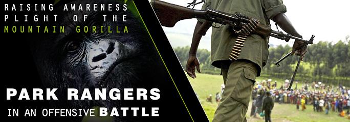 gorillas_august
